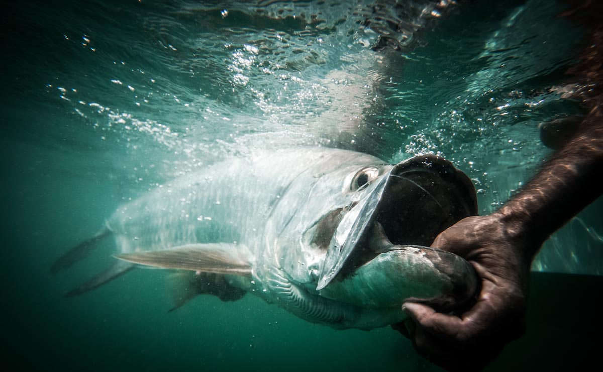 tarpon lip photo